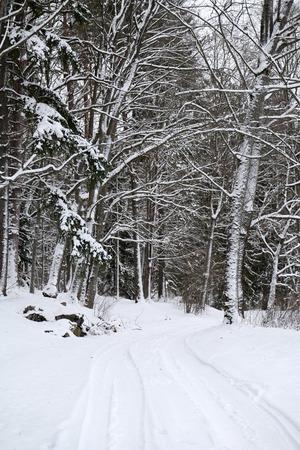 Snowy road through winter forest 写真素材