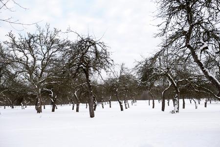 Winter landscape in snowy forest