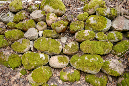 Rocks covered by green moss