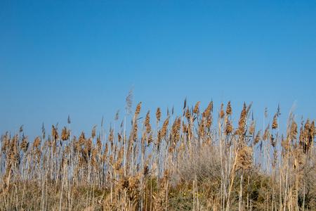 Closeup of dry wild grass