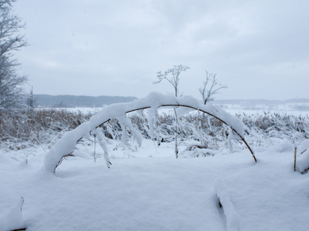 Grass covered by snow 写真素材