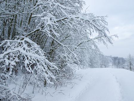 Footprint in fresh snow 写真素材