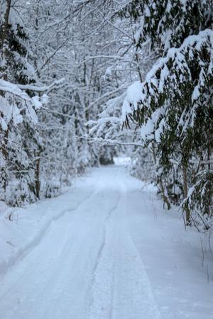Car tracks in fresh snow