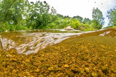 Underwater freshwater landscape 写真素材