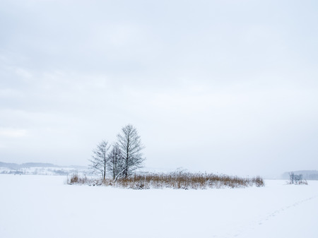 Field covered by snow 写真素材