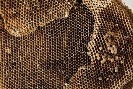 Closeup of dry honeycomb