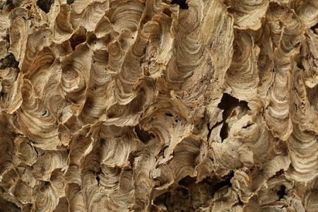 Empty wasps nest