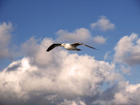Seagull soaring among clouds  Imagens
