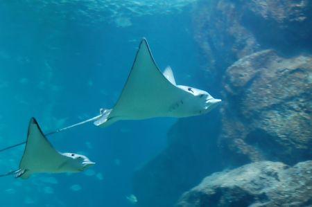 unspoiled: Underwater  Foto de archivo