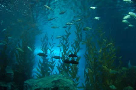 Shot from underwater