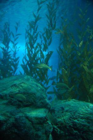Algae underwater