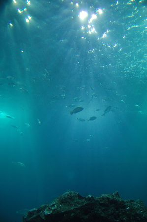 Underwater with fishes and stones