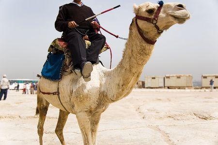 camel in desert: Egypt Police riding Camel