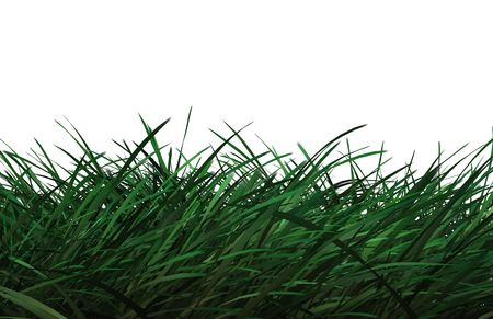 Computer generated grass on white background. photo