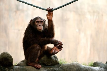 Monkey looking seriously at camera . Stock Photo - 915740