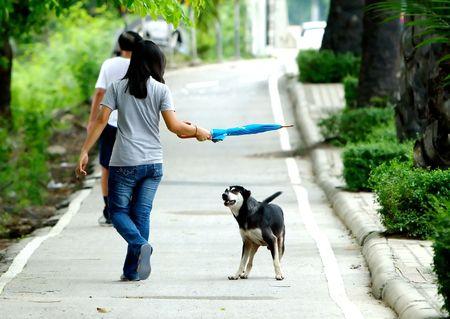 Dog preparing to attack stranger walkng by. 免版税图像