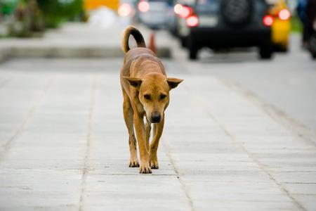 Homeless dog on street in bangkok, Thailand. 免版税图像