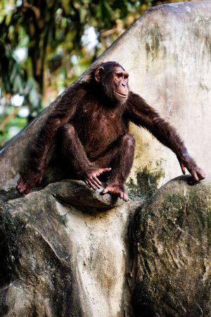 Monkey sitting on a rock. photo