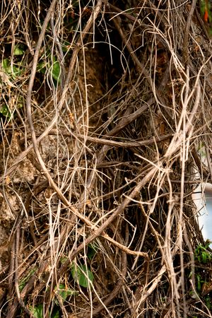 Close-Up of tree branches. Quite Shallow depth of field. Stock Photo