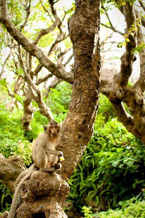 Monkey eating something while sitting on a tree. Stock Photo