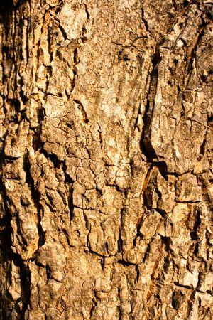 Macro of a old tree Stock Photo