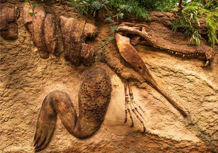 Crocodile fossil in sand stone
