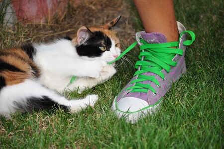 Cat playing with sneakers green tiesgirl leg