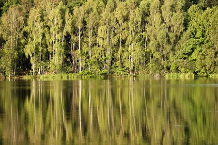 fila di alberi che si riflettono sul lago