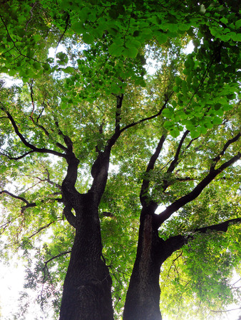 below: tree and branches from below