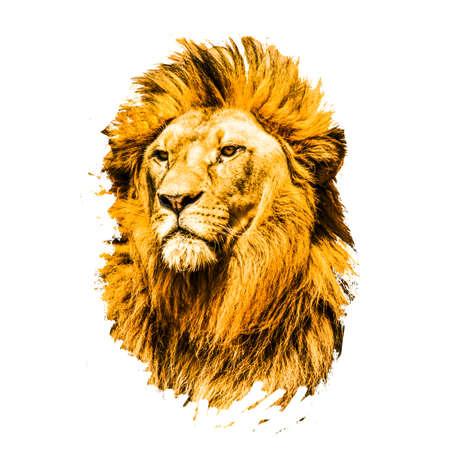 lion isolated on white background