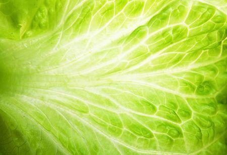 Macro texture of green lettuce leaves photo