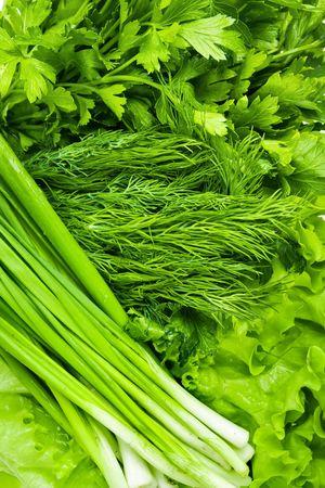 Fresh vegetables. Fennel, parsley, onion, lettuce.