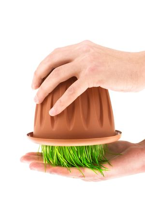 The hands holding a pot with grass (isolated on the white). photo