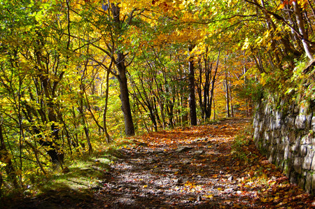 apennines: Forest path Stock Photo