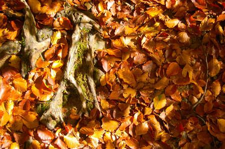 brushwood: Autumn brushwood
