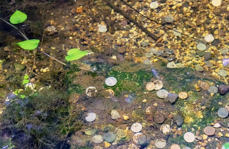 Coins lie on the bottom of the lake in the city park.