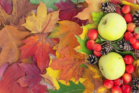 Autumn. Frame of pine cones and paradise apples on a beige background.