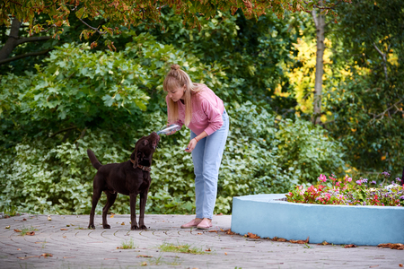 plastico pet: the dog drinks water on a hot day with the bottles