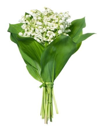 muguet: Spring flowers: lily-of-the-valley isolated on white Stock Photo