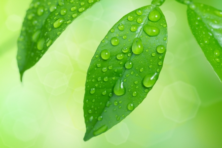 Water drops on green summer leaves Stock Photo