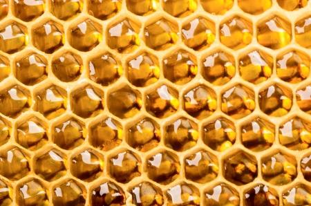 abeja reina: Cierre de vista de peine lleno de miel Foto de archivo
