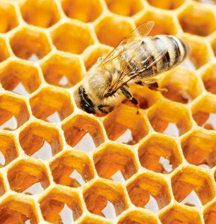 Werk bijen op honingraat