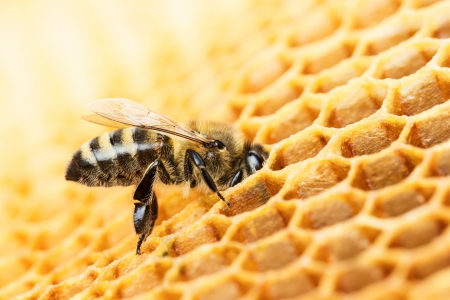 Working bee on honeycomb Banco de Imagens