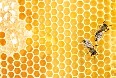ハニカムに働く蜂 写真素材