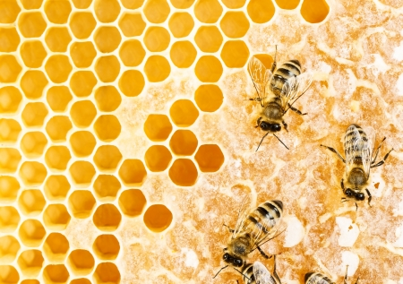 beehive: Working bees on honeycomb Stock Photo