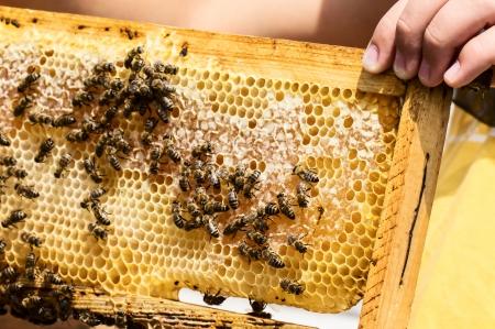 꿀벌과 벌꿀로 벌꿀 스톡 콘텐츠