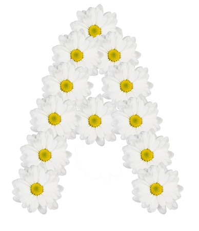Letter A made from white flowers Stock Photo
