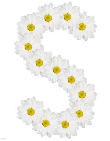 편지 흰색 꽃에서 만든 S 스톡 콘텐츠