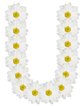 letter u: Letter U made from white flowers