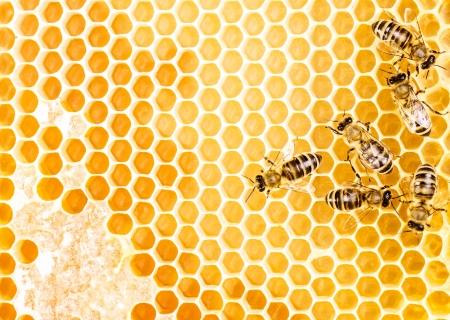 abejas panal: De trabajo sobre abejas de panal